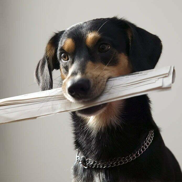 easyvet dog with newspaper