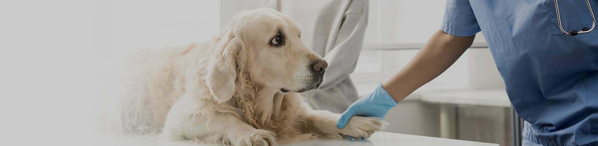 easyvet veterinarian performing sick pet exam on a dog