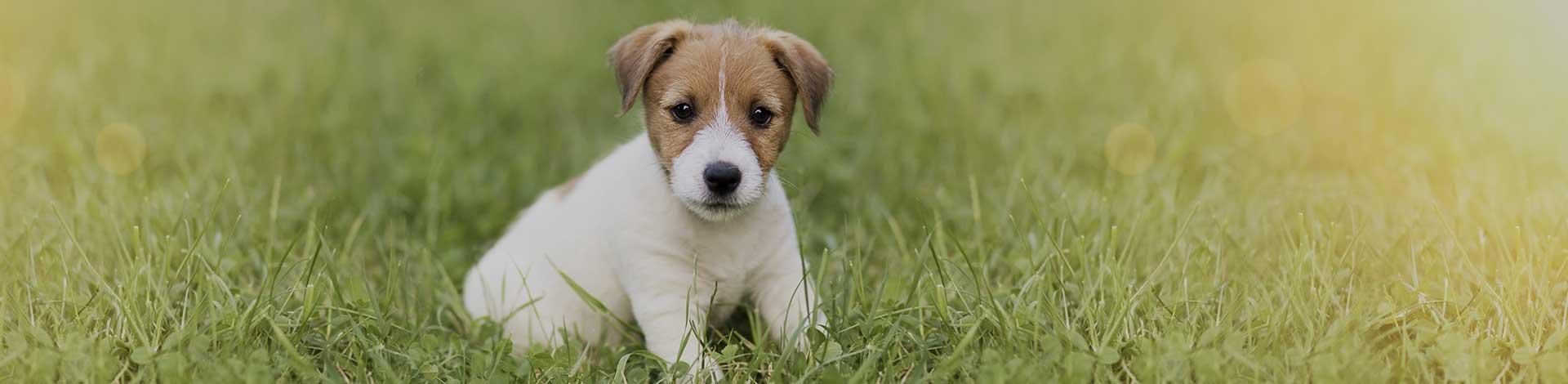New puppy veterinary exams